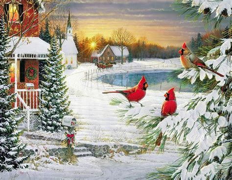 birds  bird   weekend christmas   birds