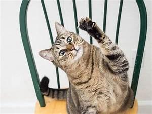Repulsif Pour Urine Chat : recherche plante qui fait fuire les chats ~ Melissatoandfro.com Idées de Décoration