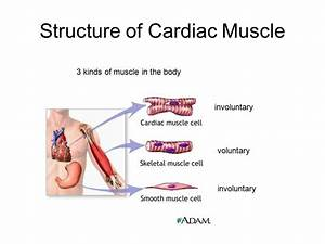 Circulatory System. - ppt video online download