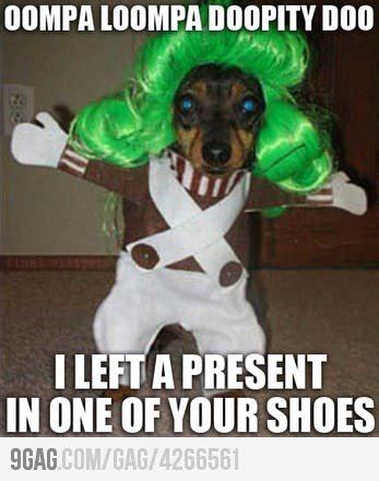 Funny Animal Memes Tumblr - dog meme on tumblr