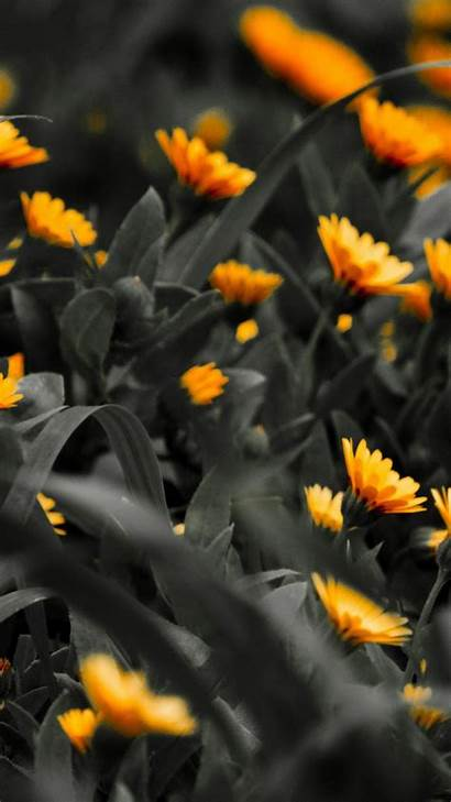 Orange Iphone Flowers Wallpapers Background Nature Flower