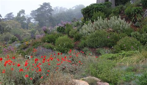 mediterranean bushes a beautiful garden filled with plants from the mediterranean basin youtube