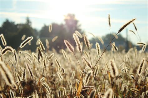 The Harvest is Plentiful, the Laborers are Few — The ...
