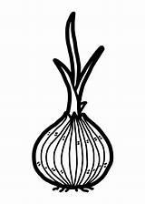 Bulb Plant Clip Onion Vector Illustrations sketch template