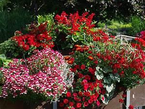 Blumen Für Den Balkon : rote blumenfreude f r balkon und terrasse ~ Lizthompson.info Haus und Dekorationen