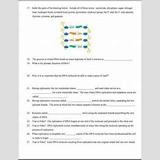 Dna, Rna, Protein Synthesis Worksheet  Study Guide By Amy Brown Science
