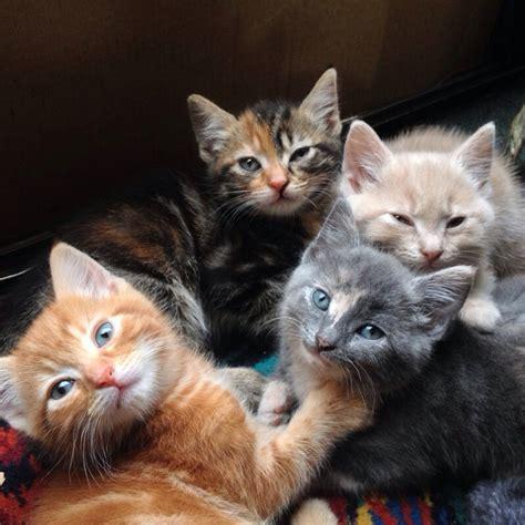 kittens cat different colours had weeks few ago they imgur yavrular kediler ve kitties pretty