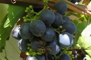 Was Vertreibt Wespen : wespen nutzen und verhalten dieser insekten einfach erkl rt ~ Articles-book.com Haus und Dekorationen