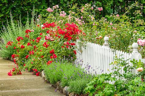 capital photography center tips  flower  garden