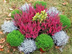 Winterharte Blumen Für Kübel : bildergebnis f r grabbepflanzung winter grabbepflanzung grabbepflanzung bepflanzung und ~ A.2002-acura-tl-radio.info Haus und Dekorationen