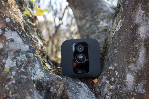 blinks newest security camera   hidden   tree