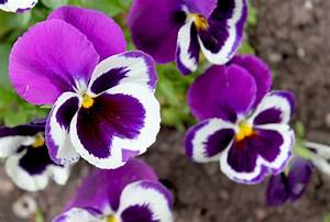 10 Edible Flowers You Can Add To Your Food – Home And