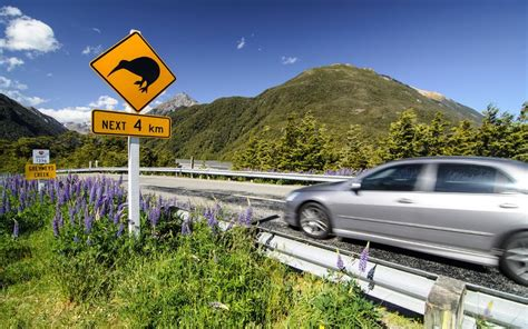 Useful Driving Tips When Hiring A Car In New Zealand
