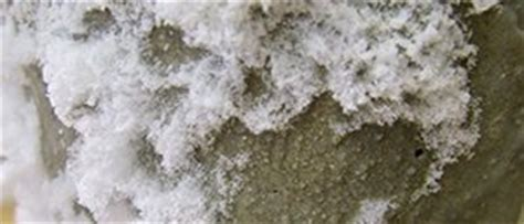 identify  white stuff   concrete wall