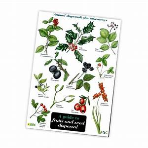 Field Guide To Fruits And Seed Dispersal  Wwfg-fs
