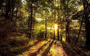 Nature, Sunny, Forest, Wallpaper
