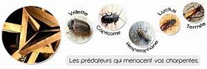 Produit Contre Les Termites : le traitement de charpente par injection diagnostic gratuit entreprise teckisol normandie ~ Melissatoandfro.com Idées de Décoration