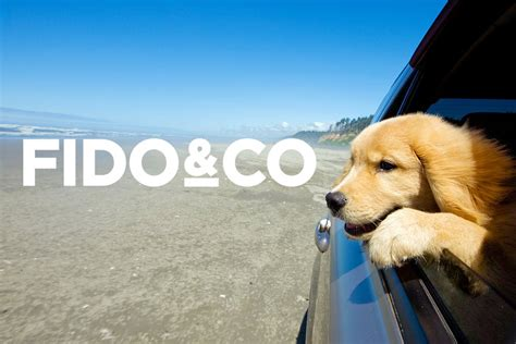 This definition includes recurring illnesses or conditions as well as injuries and associated complications. Best Pet Insurance Plans For 2021 - Fido & Co.