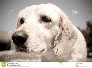 Sad Puppy Royalty Free Stock Photos - Image: 12546328