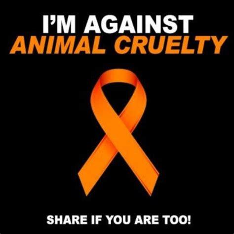 ideas  animal cruelty quotes  pinterest