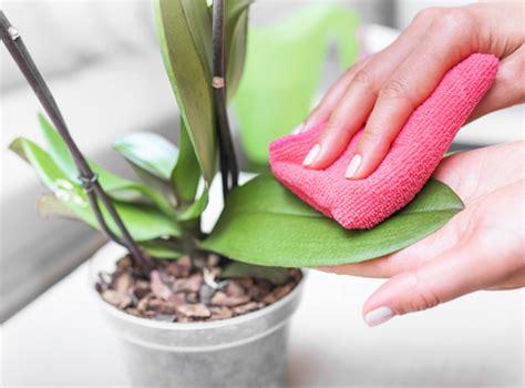 Come Curare Orchidea In Casa by Come Curare Le Orchidee In Casa Bimago It
