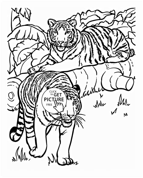animals to color tiger animal coloring pages coloring home