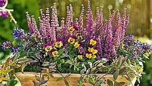 Balkonpflanzen Herbst Winter : balkonpflanzen f r sp tsommer herbst pflanzen balkon ~ Sanjose-hotels-ca.com Haus und Dekorationen