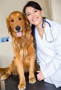 5 Things to Help Your Feel More Comfortable Dog at the Vet ...