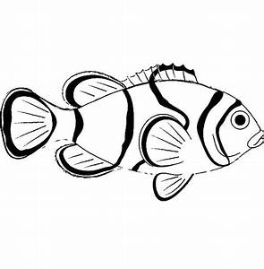 Saltwater Fish Drawing At Getdrawingscom Free For