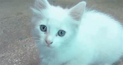 Kitten Kitty Cats Gifs Kitties Cat Mine