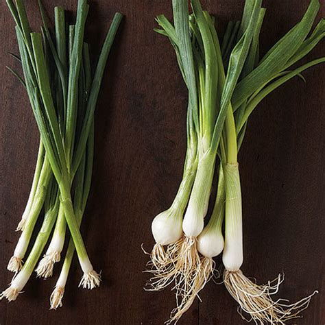 scallions  spring onions arent