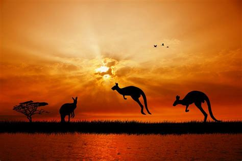 travel insurance  australia quebec blue cross