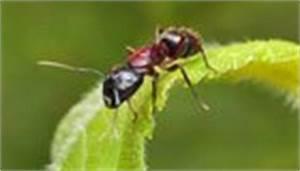 Ameisen Im Garten : sch dlinge im garten bek mpfen ~ Frokenaadalensverden.com Haus und Dekorationen