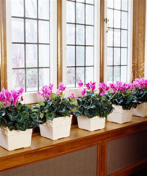 plantes pour chambre quelle plante pour quelle pièce de votre intérieur