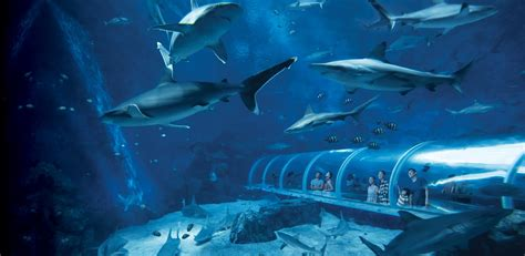 aquarium sea s e a aquarium thailand exclusive resorts world sentosa