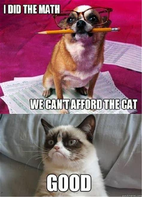 Grumpy Cat Vs Dog Grumpy Cat Wins Good I Did The