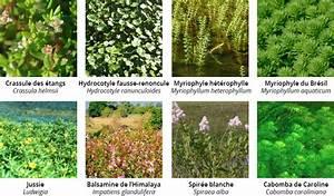 Plante Filtrante Pour Bassin : plante aquatique rhone ~ Louise-bijoux.com Idées de Décoration