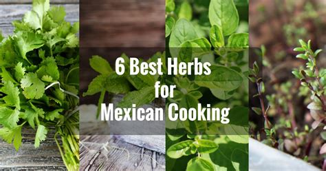 6 Best Herbs For Mexican Cooking