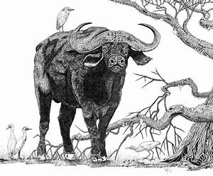 King of the Cape-Buffalo Drawing - King of the Cape ...