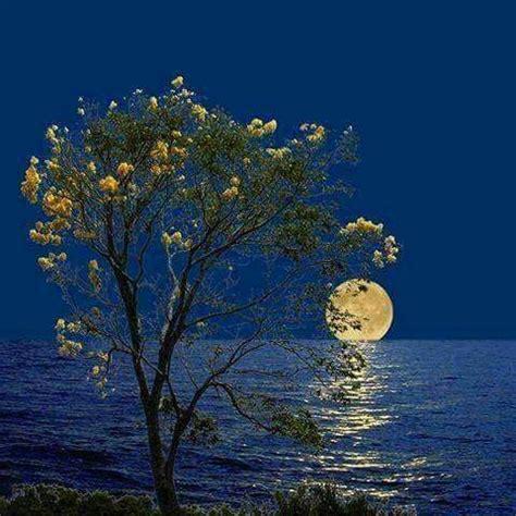 pin  jae min  nature mystic moon luna moon moon