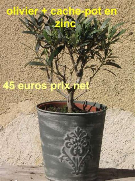 acheter un olivier de provence vente d oliviers en ligne mon olivier de provence