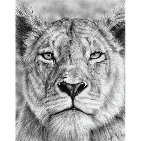 bobcats drawing hyperrealistic