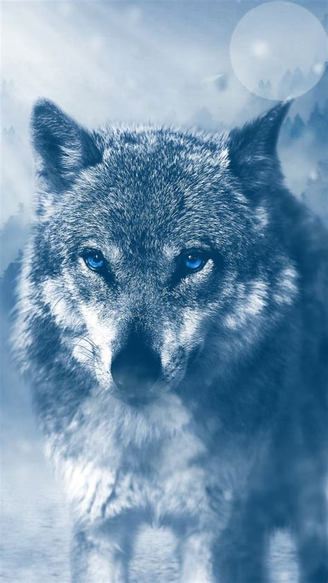 wild wolf  wallpapers hd wallpapers id