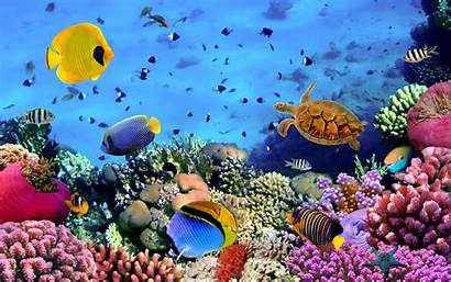 Underwater Fish Turtle Corals Widescreen Resolution Wallpapers13