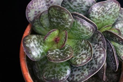 Cactus Da Interno by Piante Grasse Da Interno Piante Appartamento Piante