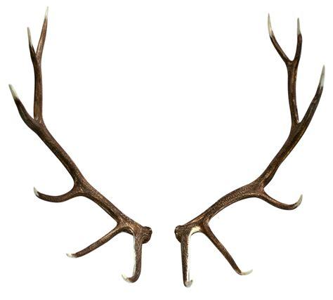 elk shed antler pair jag pinterest antlers tattoo and piercings