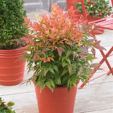 piante in vaso da esterno fiori e piante ecco alcune fra le specie pi 249 decorative e