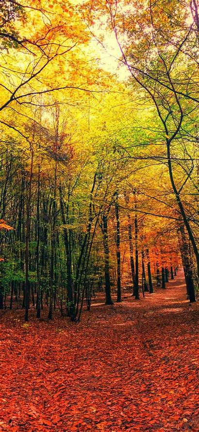 Forest Nature Autumn Sunny Wallpapers 5k Iphone