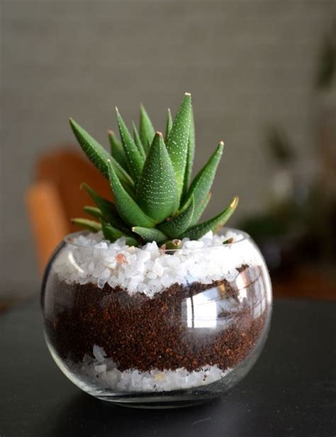 mini succulent sphere set     bangalore