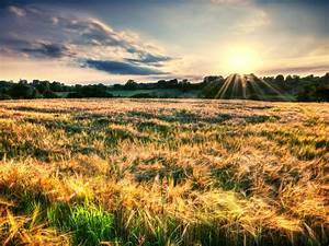 Bright, Sunlight, In, Wheat, Fields, Desktop, Background, 58793